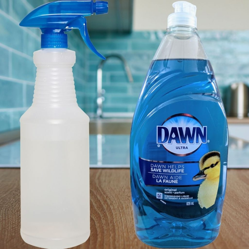 Image of Dawn bottle and spray bottle on countertop in kitchen to make Homemade all-purpose cleaner with Dawn